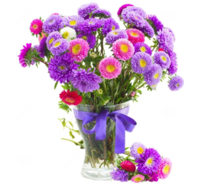 Aster PNG Pic PNG Clip art