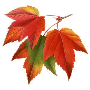 Autumn Fall Leaves Pictures Collage PNG PNG Clip art