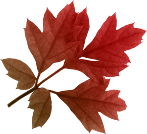 Autumn Leaves PNG Clipart PNG Clip art