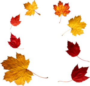 Autumn Leaves PNG File PNG Clip art