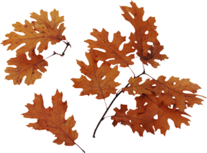 Autumn Leaves PNG Image PNG Clip art