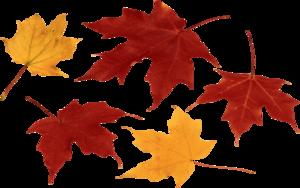 Autumn Leaves PNG Clip art