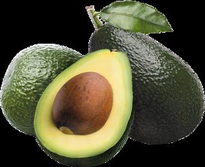Avocado PNG HD PNG Clip art