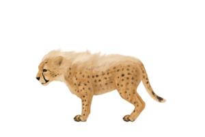 Baby Jaguar PNG Image PNG Clip art