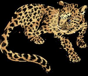 Baby Jaguar PNG Transparent Image PNG Clip art