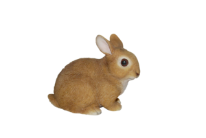 Baby Rabbits In Real Life PNG PNG Clip art