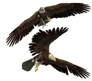 Bald Eagle Background PNG PNG Clip art