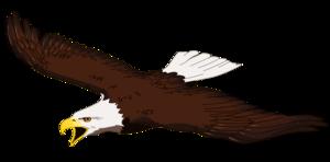 Bald Eagle Download PNG Image PNG Clip art