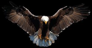 Bald Eagle PNG Background Image PNG Clip art