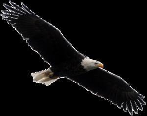 Bald Eagle PNG Clipart PNG Clip art