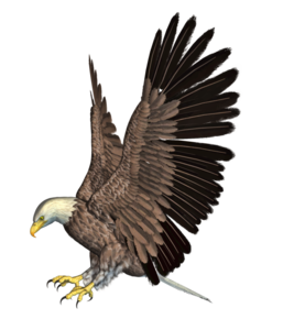 Bald Eagle PNG HD PNG Clip art