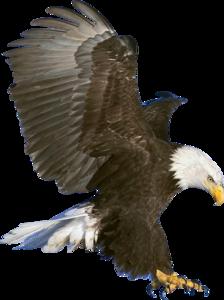 Bald Eagle PNG Picture PNG Clip art