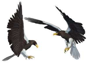 Bald Eagle PNG Transparent Picture PNG Clip art