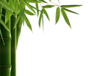 Bamboo Leaf PNG HD PNG Clip art