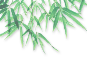 Bamboo Leaf PNG Photo PNG Clip art