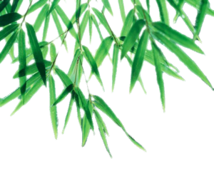 Bamboo Leaf PNG Picture PNG Clip art