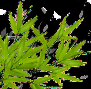 Bamboo Leaf Transparent PNG PNG Clip art