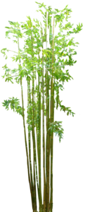 Bamboo PNG Image PNG clipart