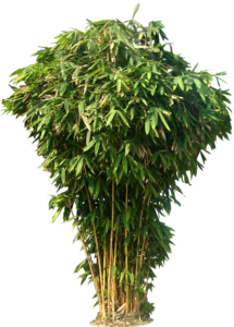 Bamboo PNG Photos PNG Clip art