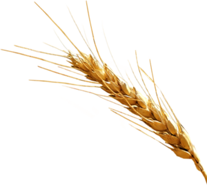 Barley PNG Clipart PNG icon