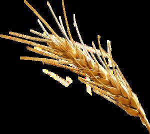 Barley PNG Clipart PNG Clip art