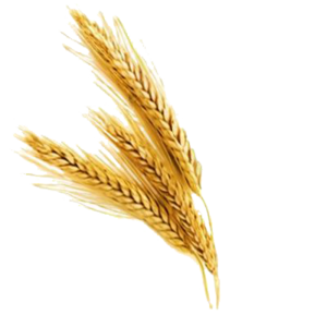 Barley PNG File PNG Clip art