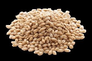 Barley PNG Image PNG Clip art