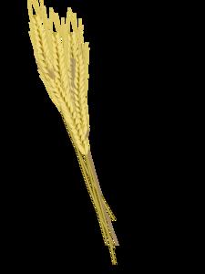 Barley PNG Photos PNG icon