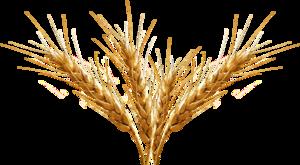 Barley PNG Transparent Image PNG Clip art