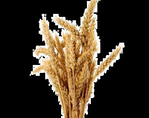 Barley Transparent PNG PNG Clip art