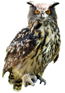 Barn Owl Background PNG PNG Clip art