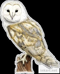 Barn Owl PNG File PNG Clip art