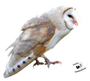 Barn Owl PNG Free Download PNG Clip art