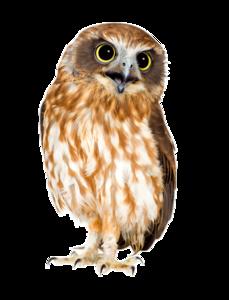 Barn Owl PNG HD PNG Clip art