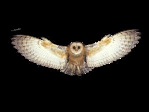 Barn Owl PNG Photo PNG Clip art