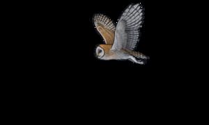 Barn Owl PNG Pic PNG Clip art