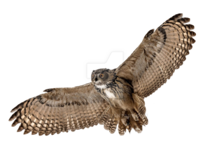 Barn Owl PNG Picture PNG Clip art