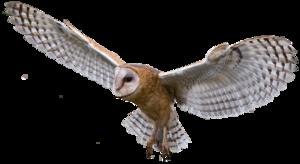 Barn Owl PNG Transparent Image PNG Clip art
