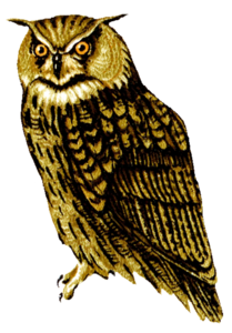 Barn Owl PNG Transparent Picture PNG Clip art