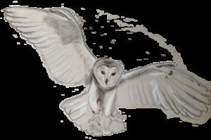 Barn Owl PNG Transparent PNG Clip art