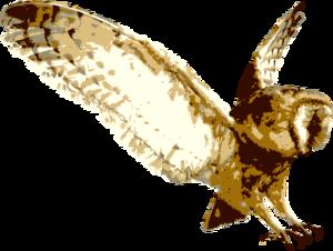 Barn Owl Transparent Background PNG Clip art