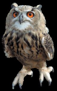 Barn Owl Transparent Images PNG PNG Clip art