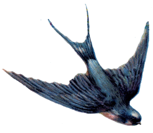 Barn Swallow PNG Background Image PNG Clip art