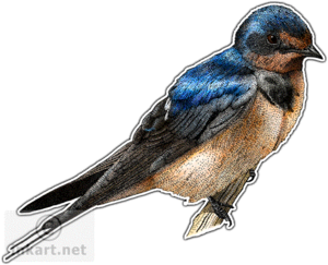 Barn Swallow PNG File PNG clipart