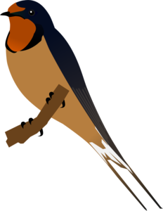Barn Swallow PNG Image PNG Clip art