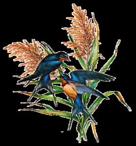Barn Swallow PNG Photo PNG Clip art