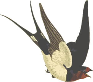 Barn Swallow PNG Pic PNG image