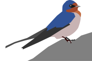 Barn Swallow PNG Transparent Image PNG Clip art