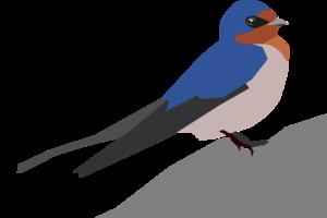 Barn Swallow PNG Transparent Image PNG Clip art