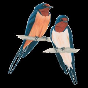 Barn Swallow Transparent PNG PNG Clip art